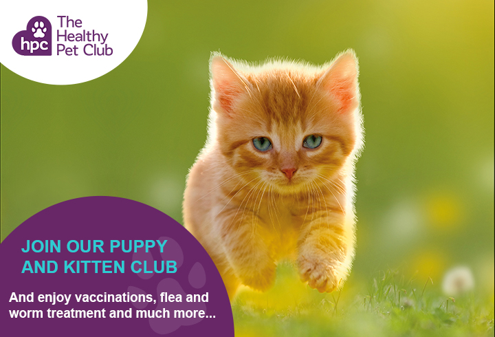 Healthy Pet Club kittens advert