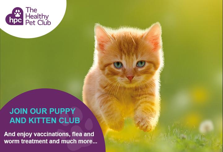 Healthy Pet Club kittens advert