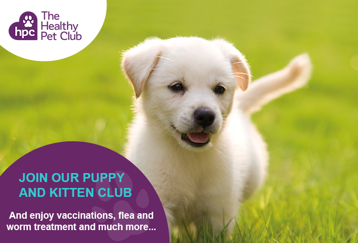 Healthy Pet Club puppies advert